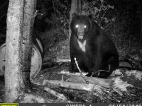 Ours de taille traqué la nuit  par caméra de surveillance au Fer à Cheval