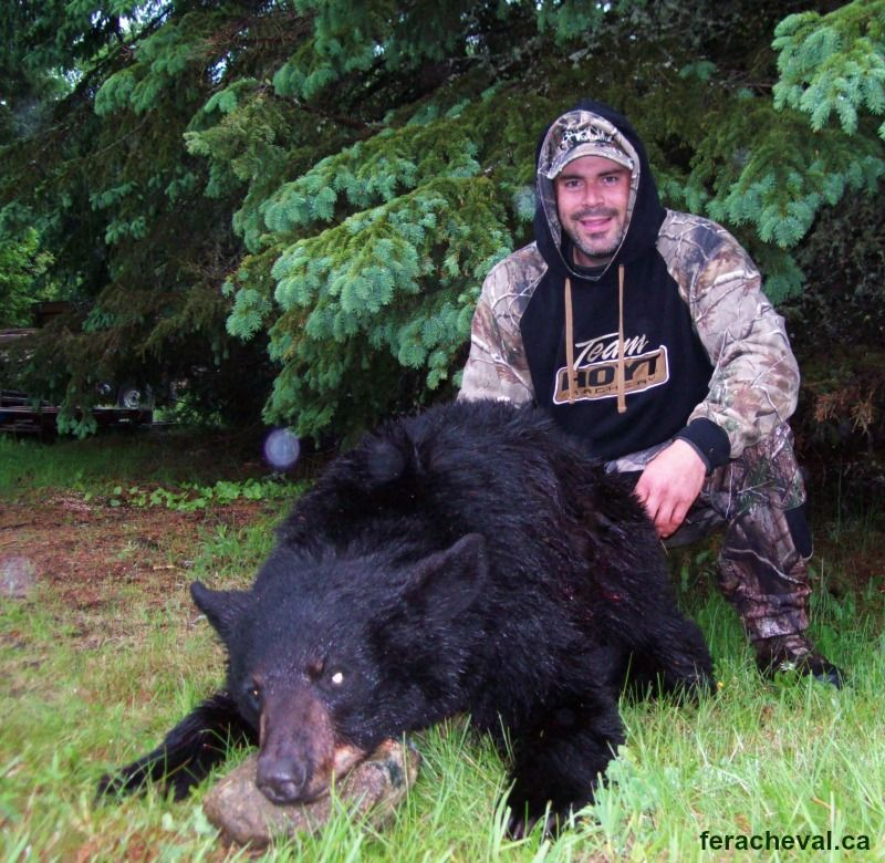 chasse-ours-noir-chasse ours noir