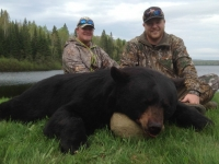 Chasse à l'ours noir à la pourvoirie fer à cheval