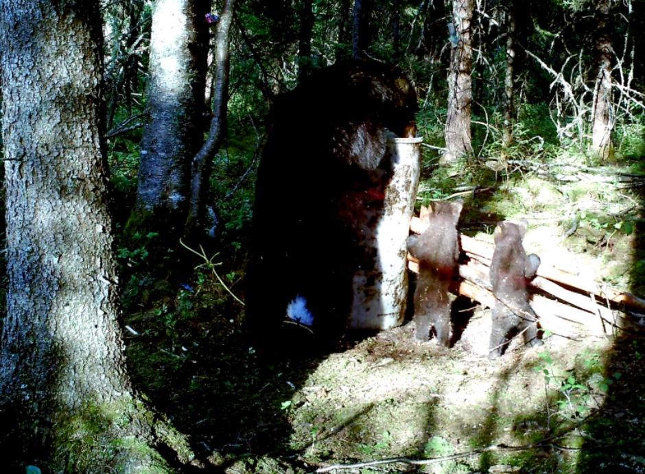 ours femelle et ses petits