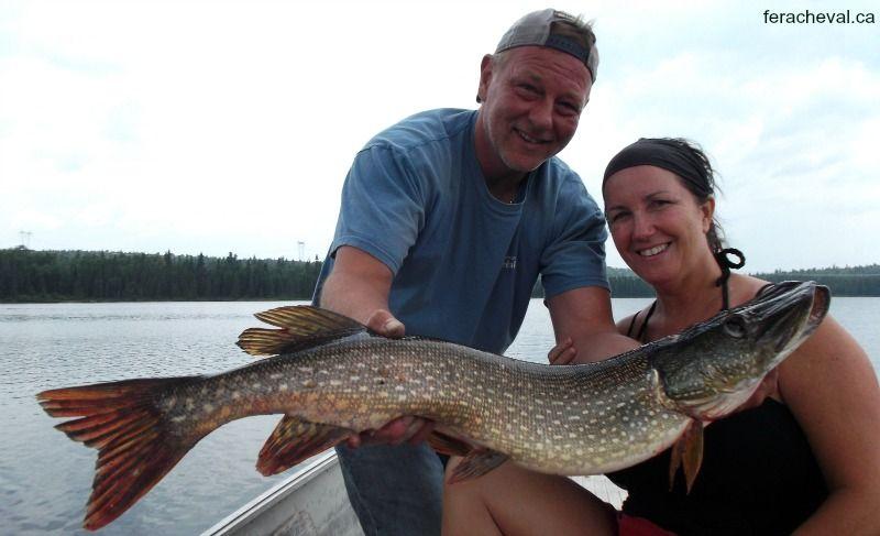 Combative trout