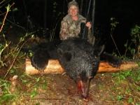 Chasse a l'ours noir en pourvoirie au Fer a Cheval, Hautes-Laurentides
