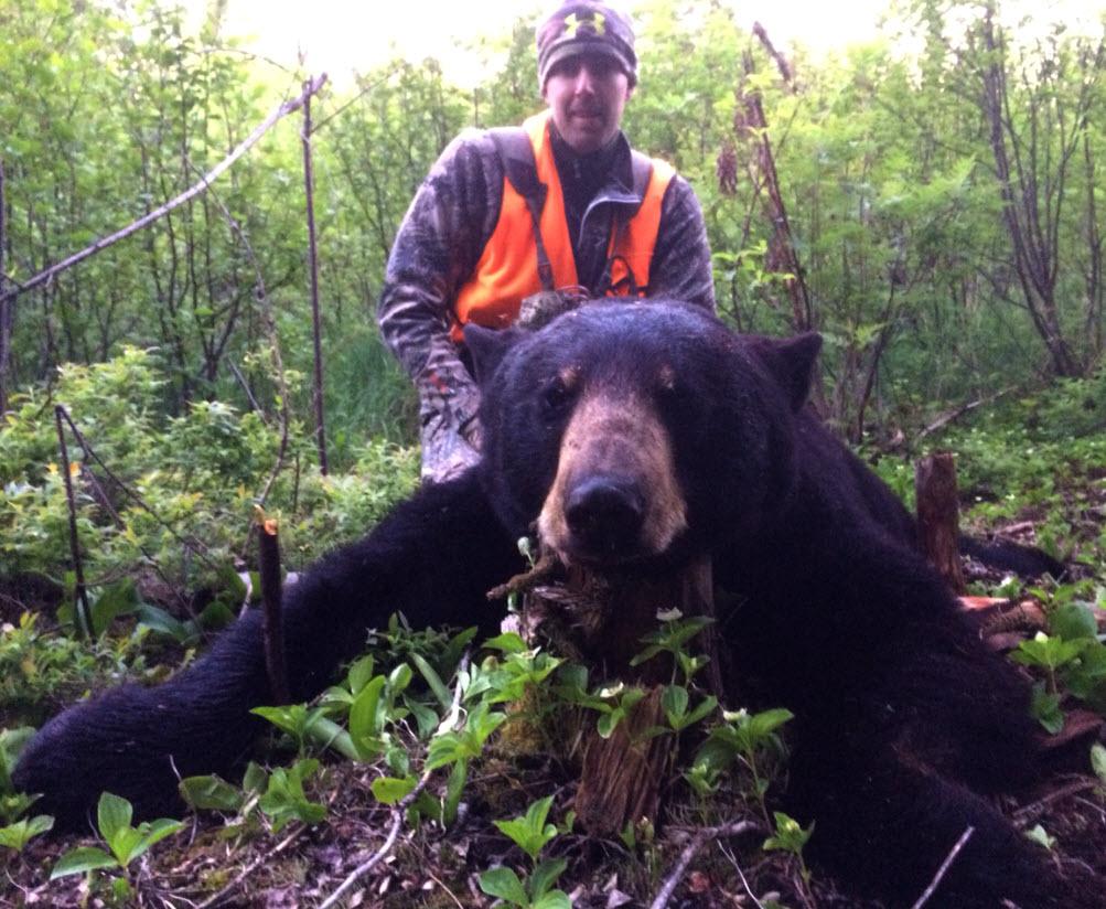 Chasse à l'ours à la pourvoirie du Fer à Cheval, Laurentides,Québec