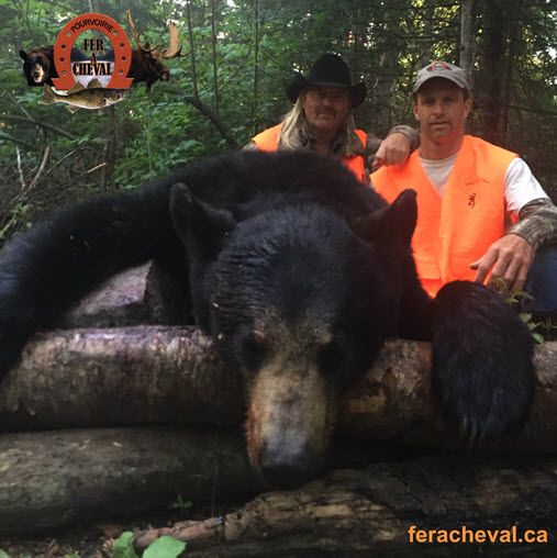 colorado buck black bear hunting in the Laurentians in Quebec, Canada