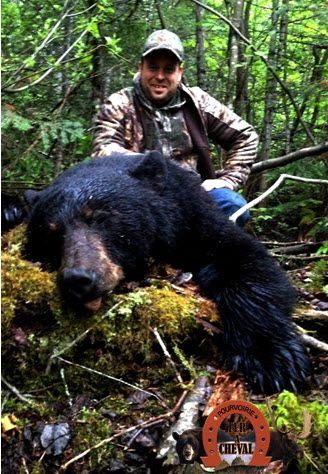 chasse ours noir