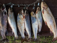 Pêche à la truite au Fer à Cheval, Hautes-Laurentides