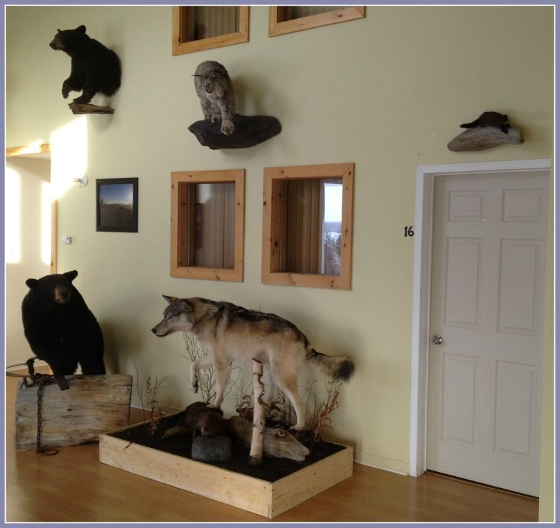 taxidermie salon pourvoirie fer a cheval laurentides