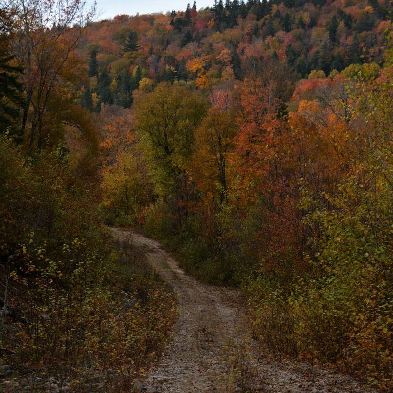 forêt-automne-pourvoirie-fer-a-cheval-laurentides
