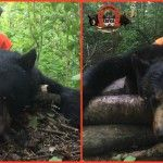 chasse ours pourvoirie fer a cheval laurentides