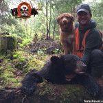 chasse à l'ours noir - chien de sang