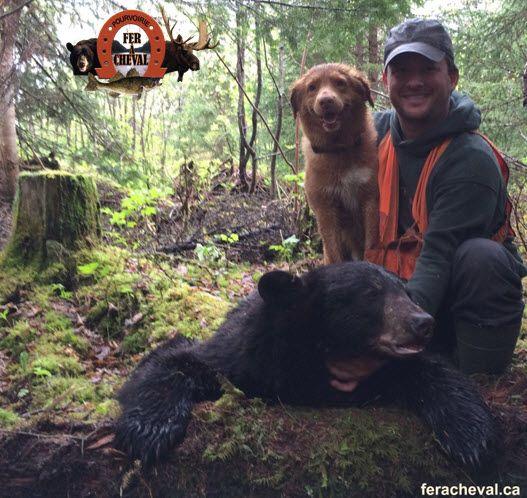 Conducteur de chien de sang dans la chasse au gros gibier