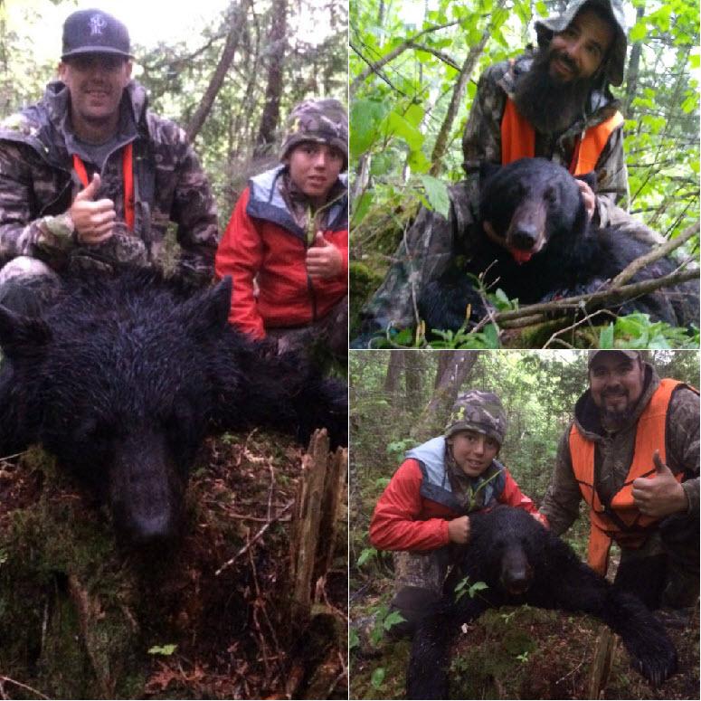 chasse ours noir au quebec